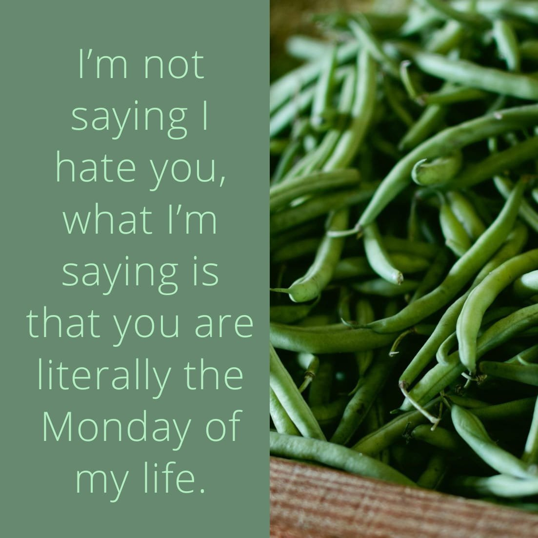 I'm not saying I hate you, what I'm saying is that you are literally the Monday of my life.